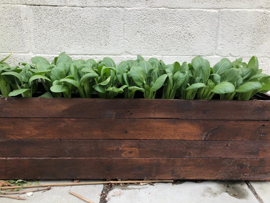 planters made from wooden pallet